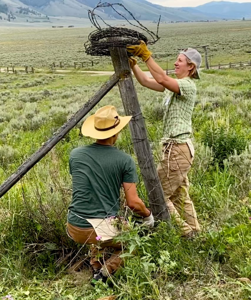 removing barbed wire fence
